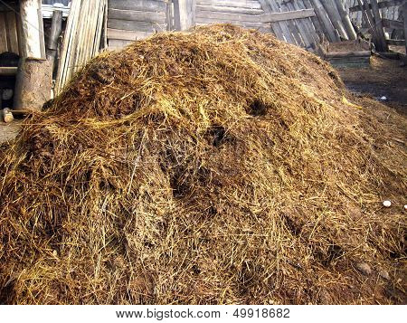Heap Of The Dung Besides The Shed