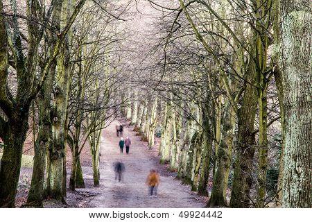 Pedestrians In A Tree-lined Avenue In Winter