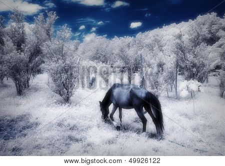 Infra-red photo of two horses on a farm