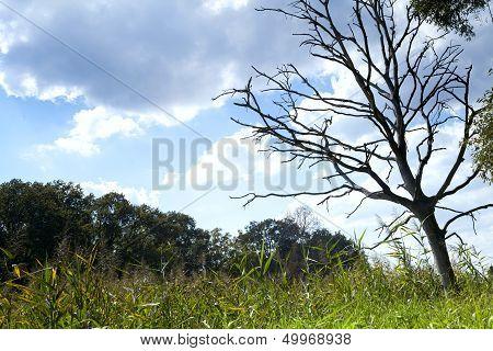 Dry Dead Tree