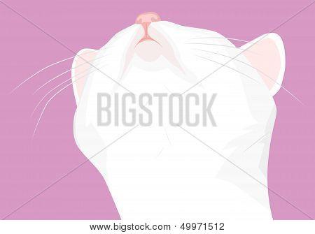 Muzzle White Cat