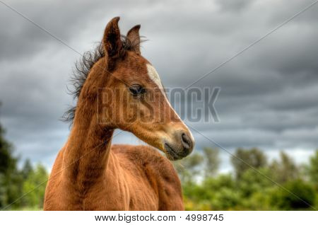 Baby Horse In Front Of A Dramatic Sky