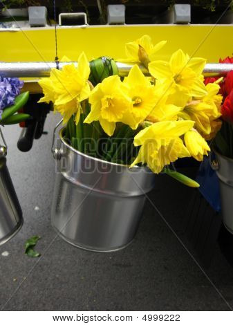 Bucket With Narcissus
