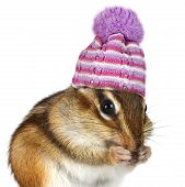 stock photo of chipmunks  - Portrait of funny chipmunk with hat on white cold weather concept - JPG