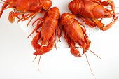 stock photo of crawfish  - Fresh boiled crawfish on white isolated background - JPG