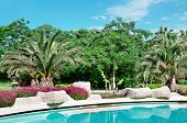 image of swales  - palm trees and flowers around the outdoor pool - JPG