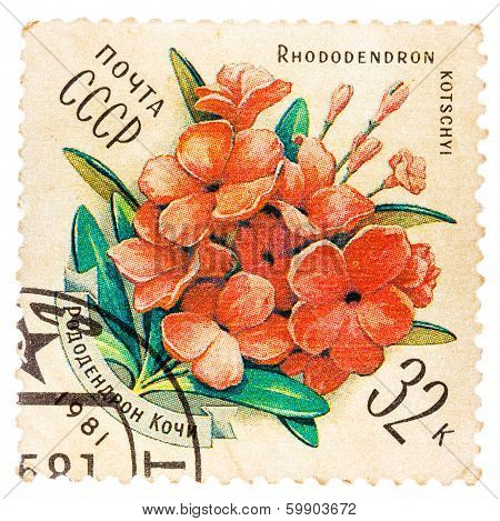 Samp Printed By Ussr, Shows Rhododendron Kotschyl