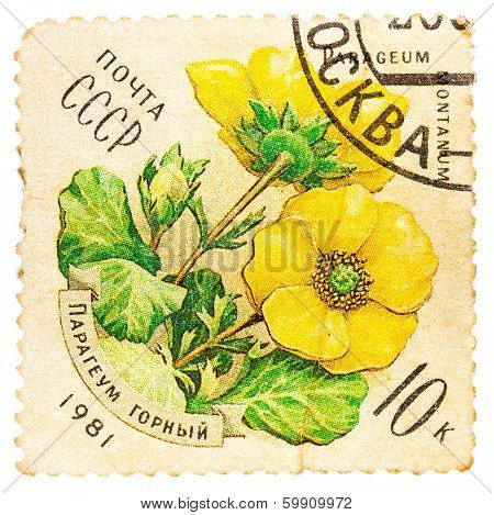 Stamp Printed By Ussr, Shows Parageum Montanum