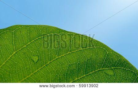 Leaf Texture On Blue Sky