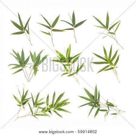 Bamboo leaves collection isolated on white.