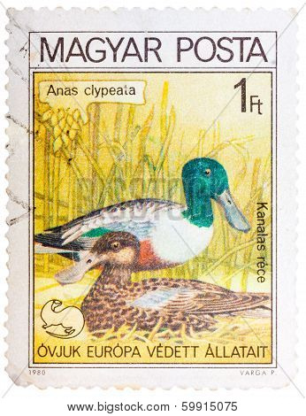 Stamp Printed In Hungary Shows A Northern Shoveler (anas Clypeata)
