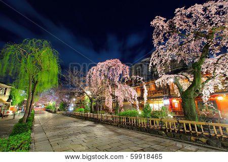 Gion in Kyoto with sakura tree at night