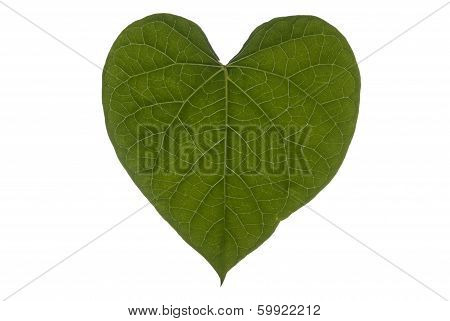 Heart Leaf Full Frame Landscape