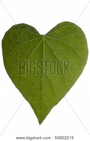 Heart Leaf Full Frame On White