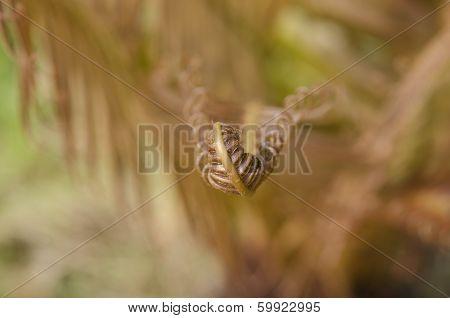Macro Young fern leaf.