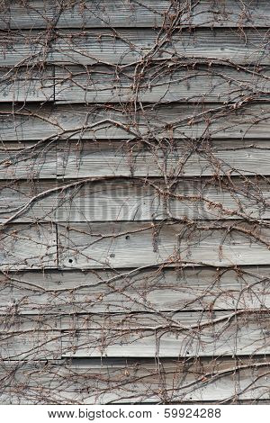 Wall Plate Of Wood Entangled With Ivy