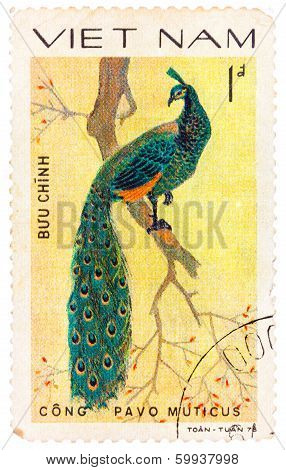 Stamp Printed In Vietnam Shows Pavo Muticus Or Green Peafowl, Series Devoted To The Ornamental Birds