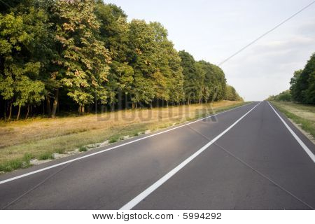 Local Road Through The Forest