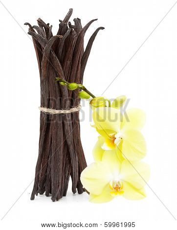 Vanilla pods and orhid flower isolated on white background
