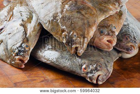 Fresh Flounders .