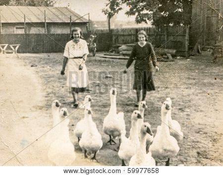 KRASIENIN, POLAND, AUGUST 7, 1939 - Vintage photo of women with geese on farm