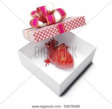 anatomical heart as a gift. creative concept
