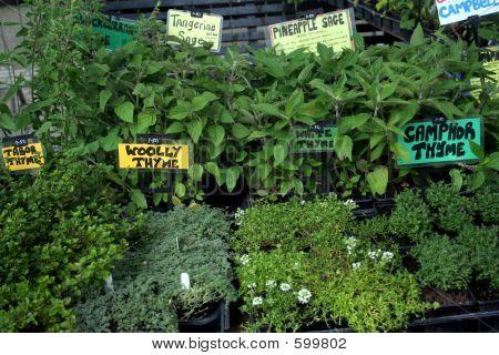 Garden Market - Fresh Herbs