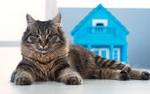 Cat And Model House