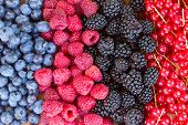 picture of blackberries  - rows  of fresh berries on  table  - JPG