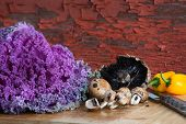 stock photo of agaricus  - Fresh healthy cooking ingredients with a head of purple curly-leaf kale fresh agaricus mushrooms and colourful yellow sweet bell peppers in a rustic kitchen on a bamboo cutting board