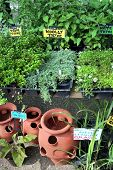 stock photo of potted plants  - image of fresh herbs and ceramic pots at a garden market - JPG