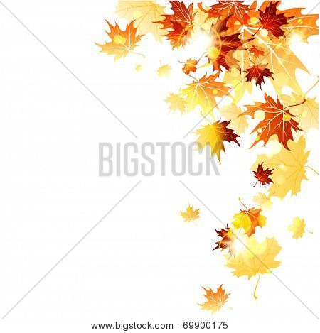 Falling maple leaves on white background. Copy space. Raster version.