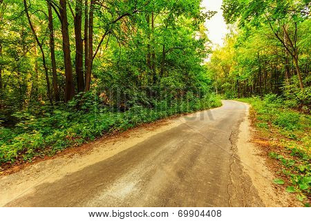 Old Road In Forest