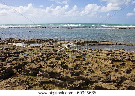 Coral at Porto de Galinhas beach