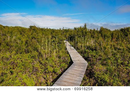 Parque Nacional Of Chiloé, Chiloé Island, Chile