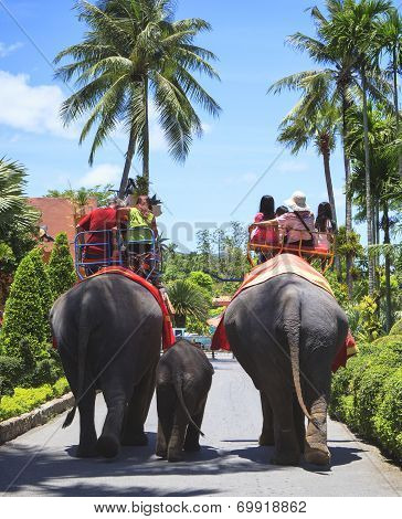 Tourist Riding On Elephant Back