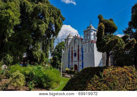 Biggest Tree In The World, Arbol Del Tule, Mexico
