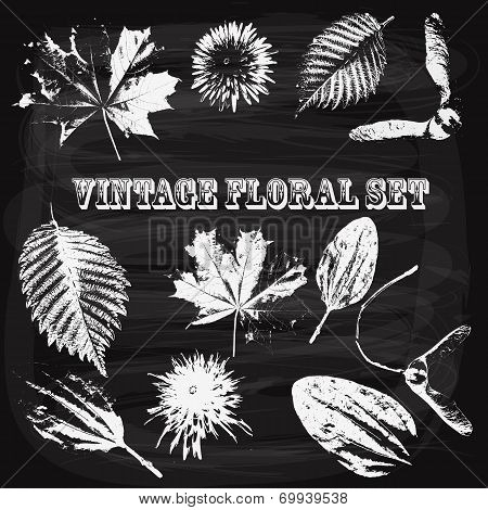 Vector Vintage Style Floral Elements On Blackboard