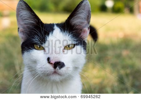 Close Up Portrait Of A Black And White Cat