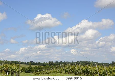 Cumulus Clouds Over Surrey. England