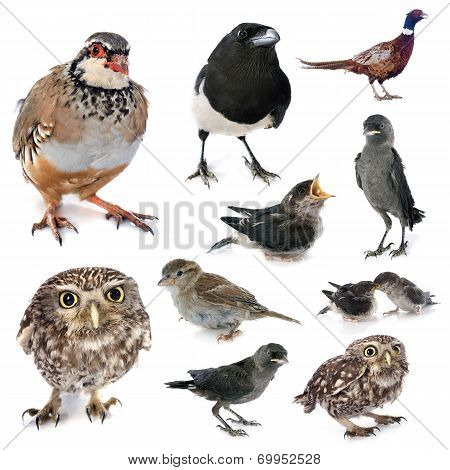 Group Of Wild Birds