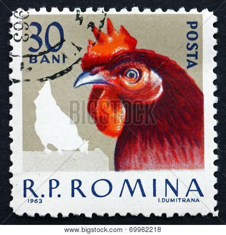 Postage Stamp Romania 1963 Hen, Domestic Poultry