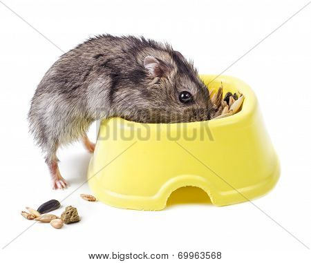 Hamster With Bowl