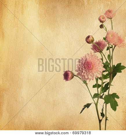 Paper texture with pink chrysanthemum