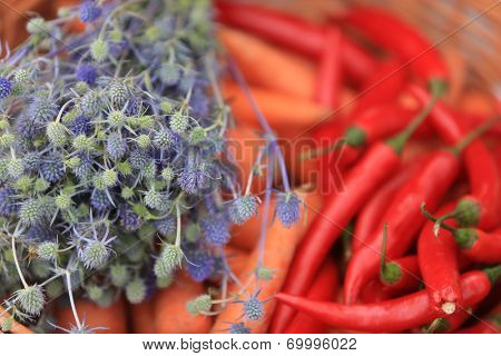 Chili, carrot and violet spines background. Shallow DOF