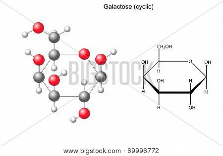 Structural Chemical Formula And Model Of Galactose