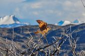 foto of pain-tree  - Pray bird in Parque Nacional Torres del Paine Chile. ** Note: Soft Focus at 100%, best at smaller sizes - JPG