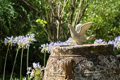 image of holy-spirit  - Garden decoration with a pigeon in the english cemetery in Corfu city - JPG