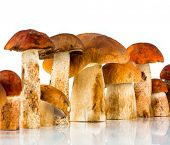 stock photo of porcini  - Orange - JPG