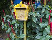 Picture of old rusty yellow mailbox.
